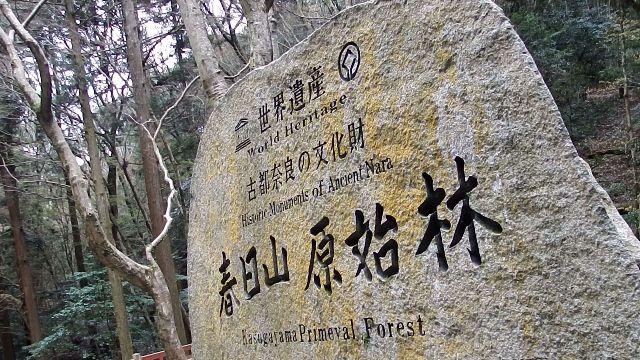 春日山原始林の石碑