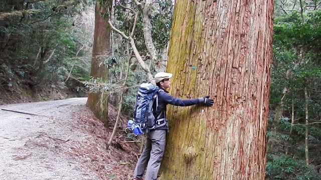 春日山原始林の巨木
