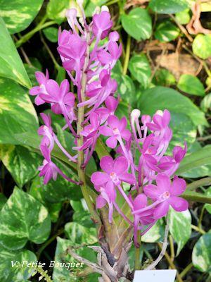 V. Petite Bouquet