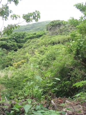 庭からの景色