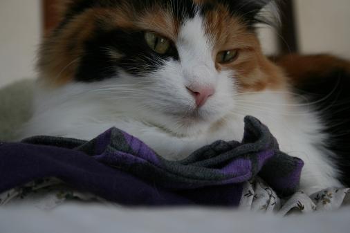 洗濯物の上の猫1