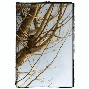 諏訪湖の木