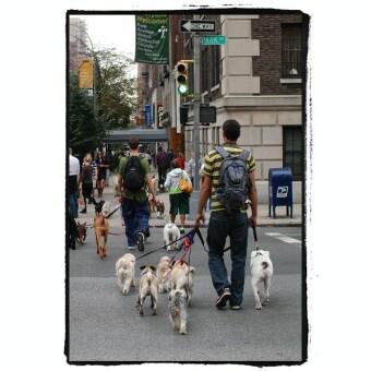 犬散歩バイト