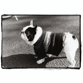 神宮外苑の犬