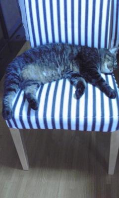 ネロ寝る2