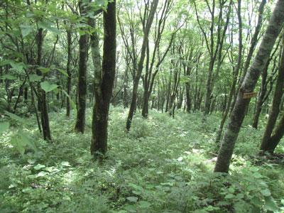 天狗高原の森