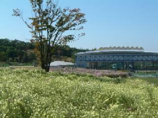万博公園コスモス畑