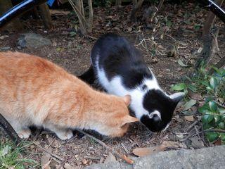 内宮おはらい町の猫