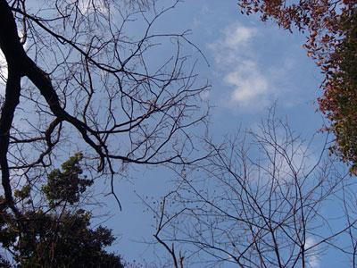 tree081228