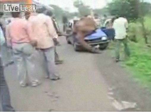 【衝撃映像】自動車事故にあったラクダ【閲覧注意】