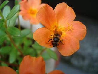 オレンジの花でもやっぱりお仕事