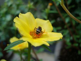 黄色い花でもまだまだお仕事