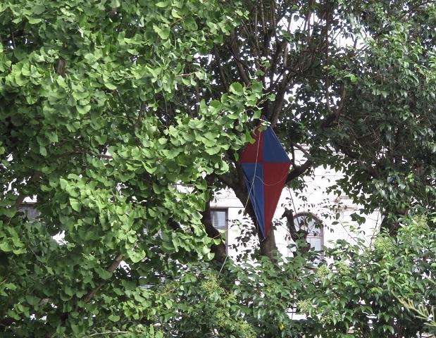 凧食いの木