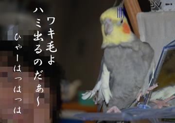 ハミ出るのだ!!