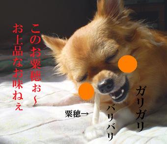 オカメイヌコさん