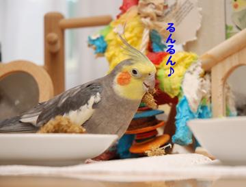 粟穂大好き!