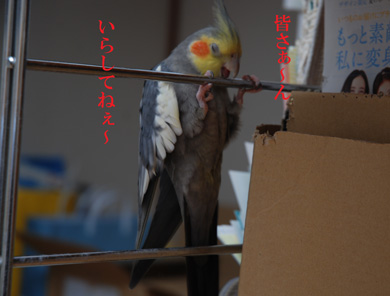 いらしてねぇ〜.jpg