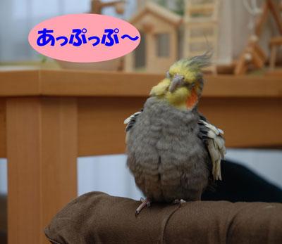 あっぷっぷ〜.JPG