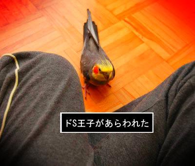 王子登場.JPG