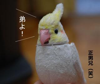 正男兄.jpg