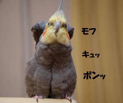 新手の?.JPG