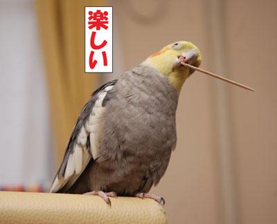 たのしい2.JPG