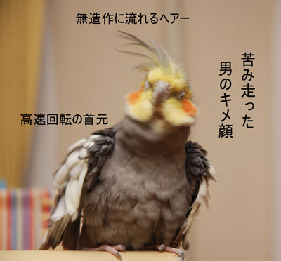 ダンディ☆モフ.jpg