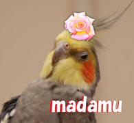 マダム.JPG