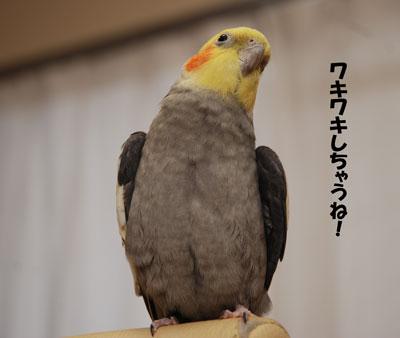 こんにちは〜.JPG