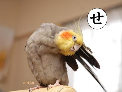 ニコッ(burogu.jpg