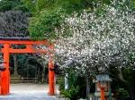 玉津島神社の梅