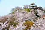 高津子山を桜の山に