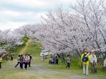 桜ウォーク