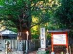 速玉神社の神木