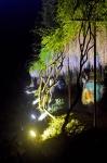 白毫寺の九尺藤