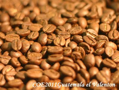 コーヒー生豆COEガテマラ