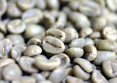 コーヒー生豆 コロンビアエスメラルダ