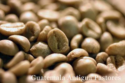 コーヒー生豆パストレス