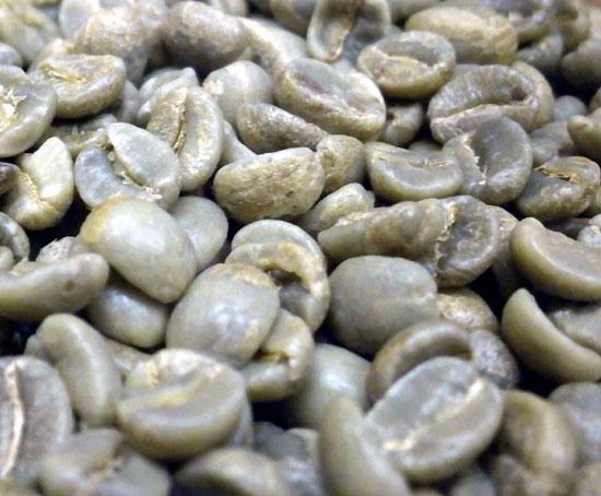 コーヒー生豆 エーデルワイス