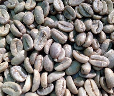 コーヒー生豆ジャバニカ