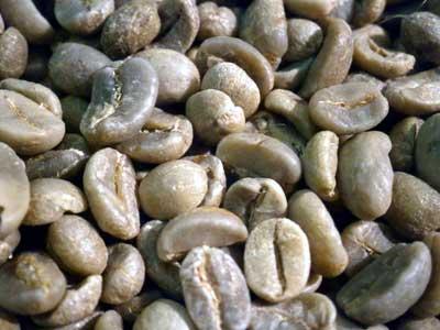 コーヒー生豆グァテマラSHB