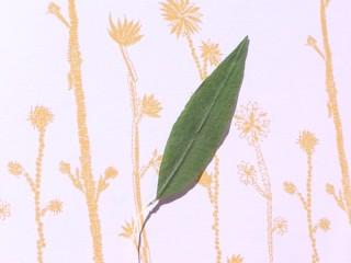 レモンバーベナの葉