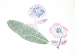 ラムズイヤーの葉