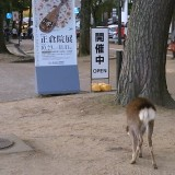 正倉院前の鹿