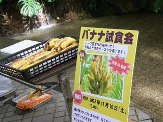 バナナ試食会