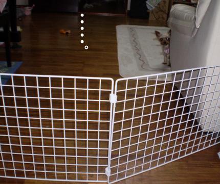 網の高さ40センチ