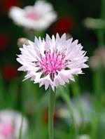 エピローグ花2