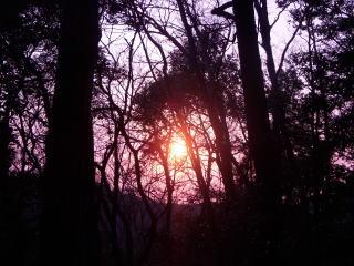やすらかの森に沈む夕陽
