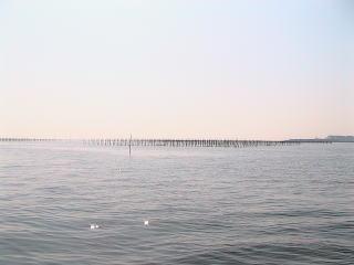 東京湾の海苔の養殖