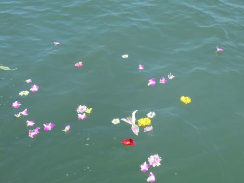 綺麗な海と花